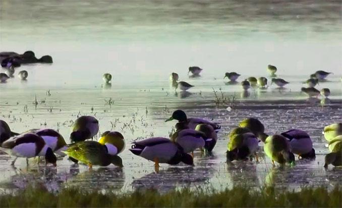 Laguna-manjavacas